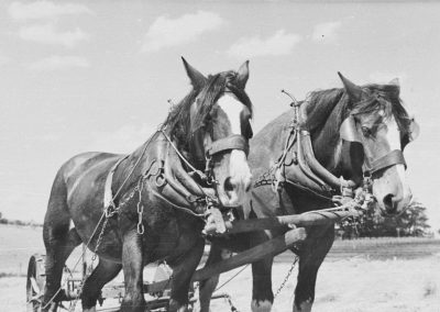 George Williams and his horses at K.G.