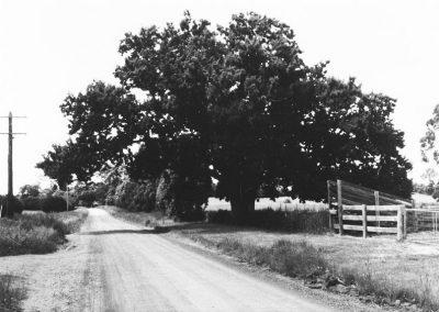 21 Donaldson Oak in Donaldson Road, K.G.