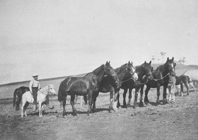Mr Mess and his horses at K.G. c. 1900