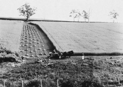 Farming Kangaroo Ground