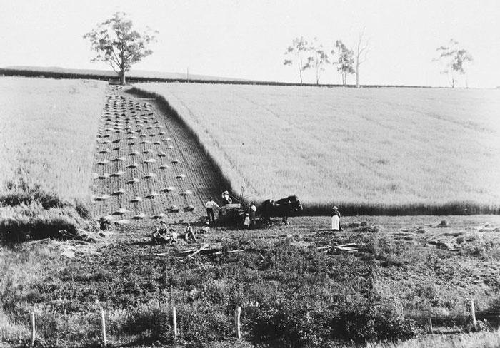 kangaroo ground farming history