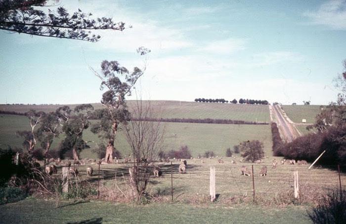 before power lines kangaroo ground